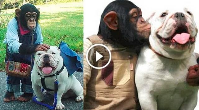 La amistad entre un chimpancé y un perro se convierte en viral