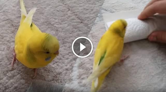 Pajarito llora la muerte de su compañero en este emotivo video