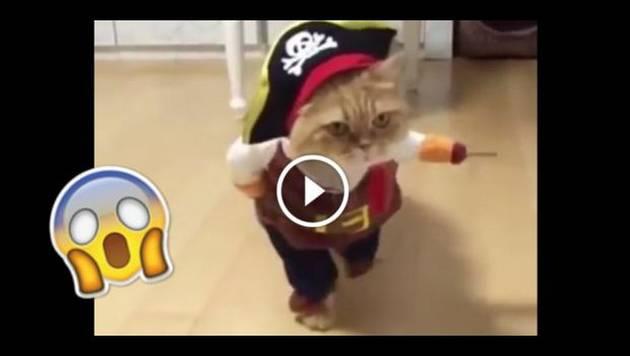 Este gatito la rompe en Facebook con su disfraz de Halloween