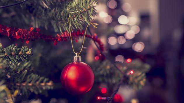 Ella no esperaba encontrar a este peligroso animal en su árbol de Navidad [FOTO]