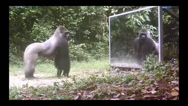 YouTube: animales reaccionando ante su reflejo es lo más visto en Perú