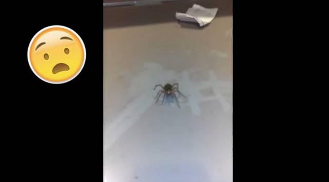 Si te asusta esta araña, cuando veas el video ¡Morirás de miedo!