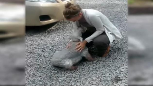 Este perro se 'desmayó' al ver a su dueña luego de dos años [VIDEO]