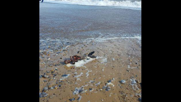 ¿Hallan cadáver de una sirena? Este video genera polémica
