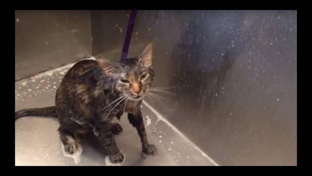 YouTube: Gato dice 'no más' en pleno baño