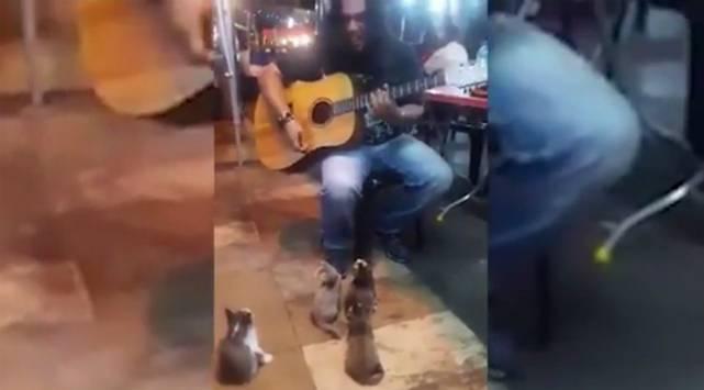 Estos gatitos le hicieron la noche a este músico callejero [VIDEO]