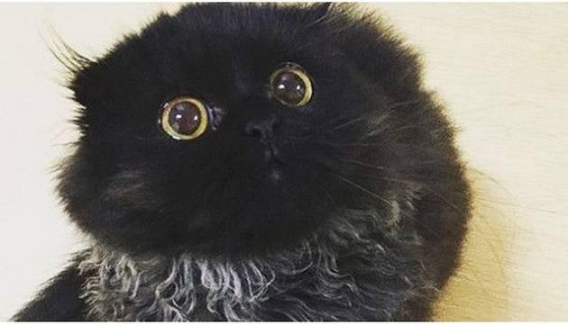 Gimo, el gato más tierno de Instagram ¡No te resistirás a sus ojos!