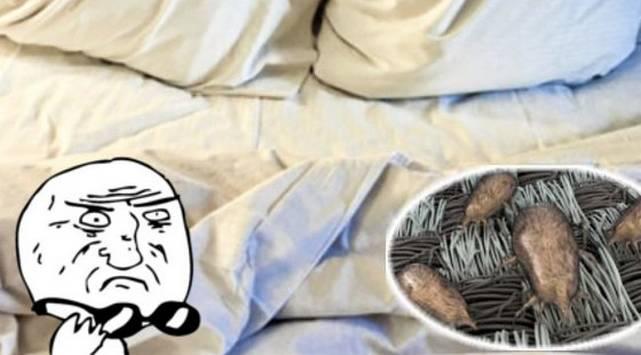 ¡No imaginas lo que pasa si no cambias tus sábanas!