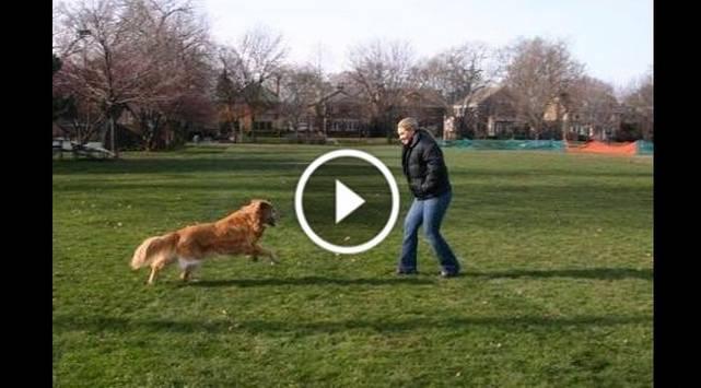 Lanzó las cenizas de su perro y jamás imaginó que sucedería esto