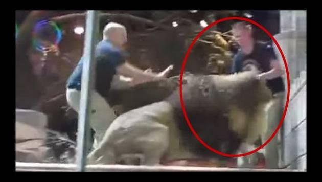 Leona evita que león se coma a su cuidador