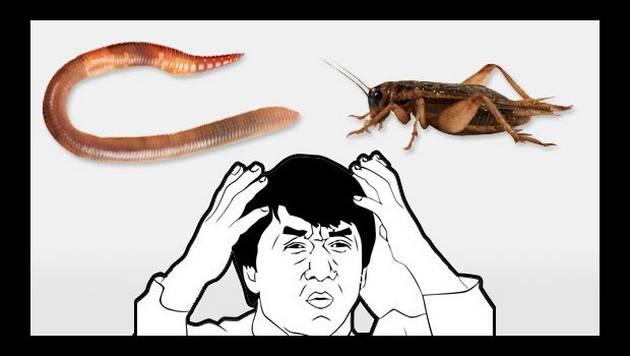 ¿A qué saben los grillos y los gusanos de tierra?