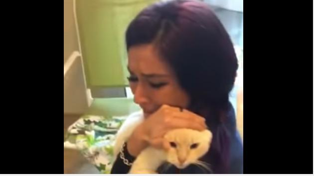 ¡Mira el encuentro entre un gato y su dueña luego de casi dos años de que este desapareciera! (VIDEO)