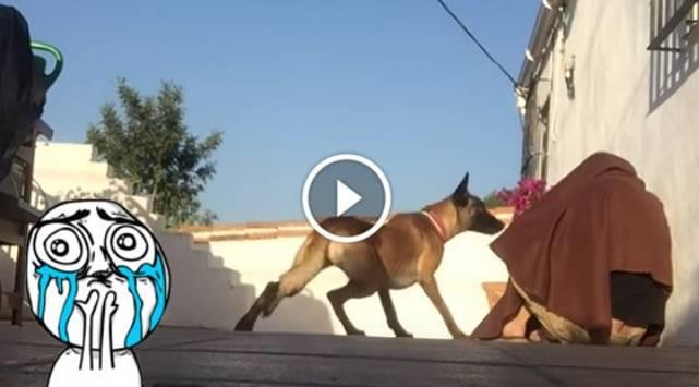 ¡La reacción de este perro al reencontrarse con su dueño es conmovedora!