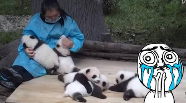 ¡La chamba de tus sueños! No creerás cuánto gana un cuidador de osos panda