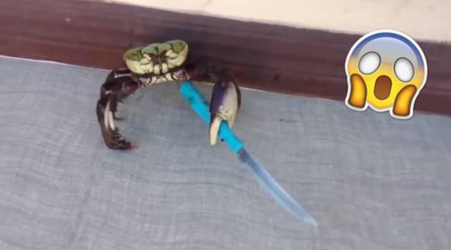 Cangrejo defiende su vida con un cuchillo y se convierte en viral
