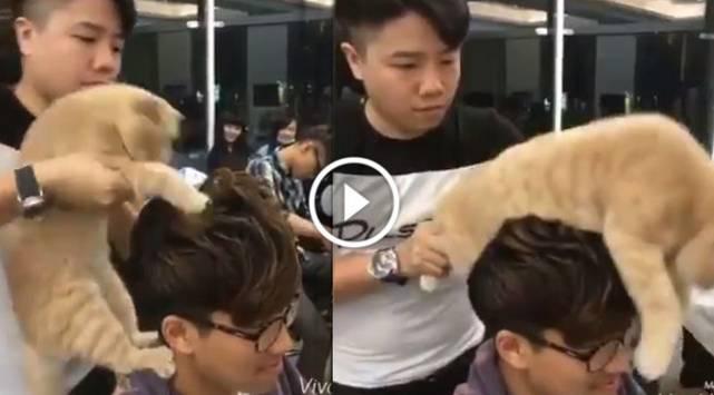 ¿Gato peluquero? ¡No vas a creer lo que hizo con este cliente!