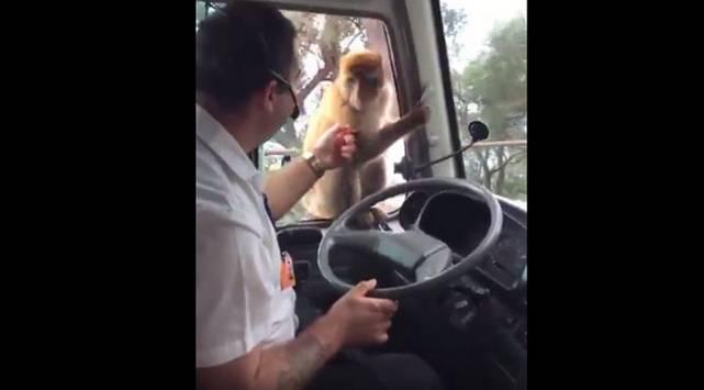 Mono se pasó de 'vivo' y robó la comida de este chofer