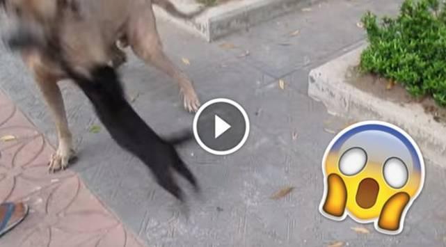 ¿Gata ninja? Mira cómo se enfrenta a un perro y defiende a sus gatitos