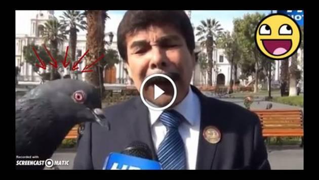 Palomas trolean a alcalde de Arequipa durante entrevista