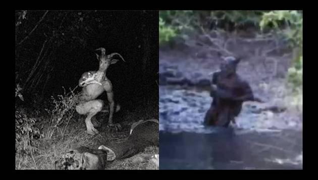 YouTube: compilado de las criaturas más extrañas captadas