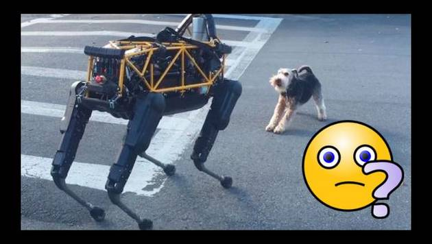 Encuentro entre perro robótico y uno real es furor en YouTube [VIDEO]