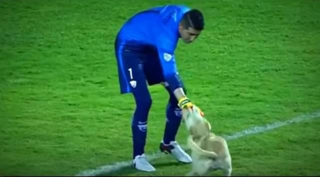 Este perrito fue el verdadero 'crack' de este partido de la Copa Libertadores