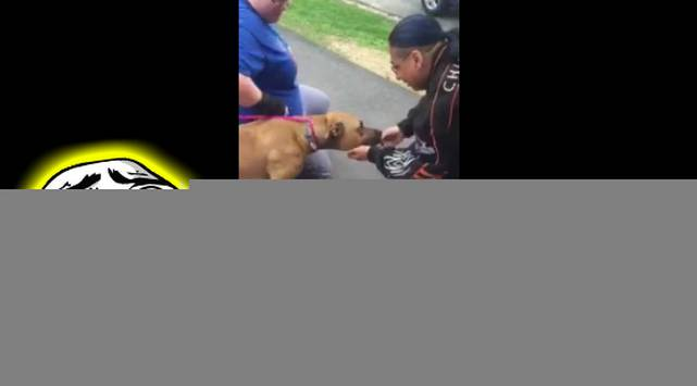 Facebook se derrite por cómo reaccionó este perrito al reencontrase con su amo después de dos años