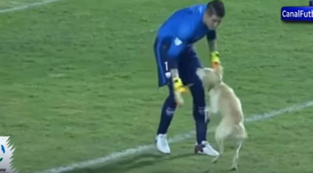Perro se robó show en la cancha de la Copa Libertadores
