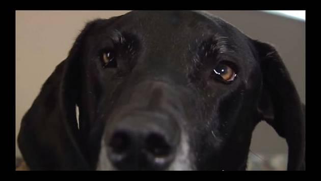 YouTube: La iban a matar a martillazos hasta que su perro hizo esto