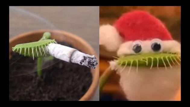 ¿Una planta carnívora de mascota? Este video genera polémica