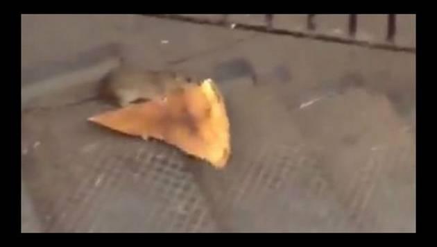 ¡Video de rata huyendo con pizza se convierte en viral!