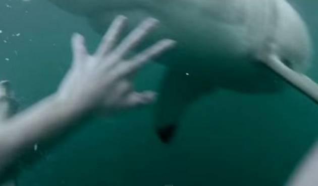 Hombre escapa de un tiburón y lo graba todo
