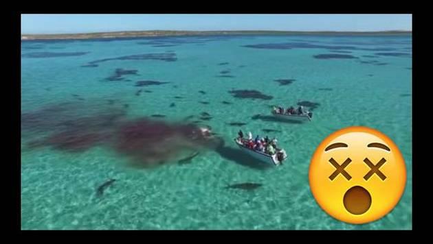¡Imágenes impactantes! Una ballena fue atacada por 70 tiburones