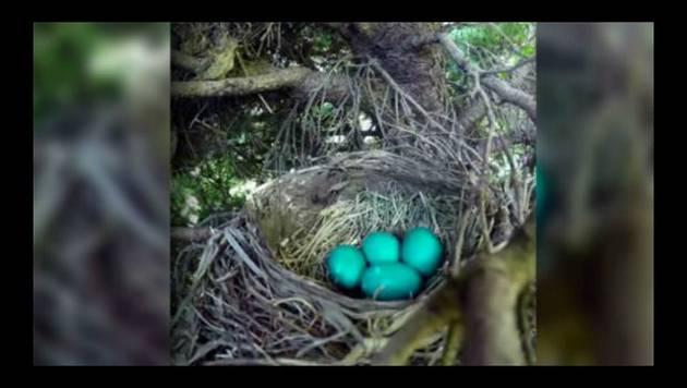 Quiso grabar el nacimiento de unos pájaros para YouTube, pero lo que pasó fue... [VIDEO]