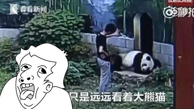 Jamás interrumpas el sueño de un panda, pues podrías terminar así [VIDEO]