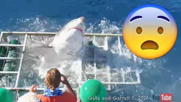 ¡Un tiburón hizo vivir momentos de terror a buzo y turistas! [VIDEO]