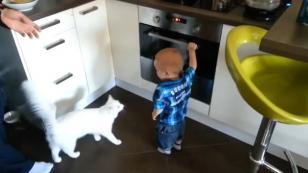 Este gato protege a un niño para que no se queme al tocar un horno [VIDEO]