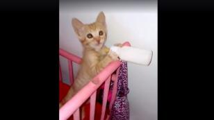 Este gatito enternece al pedir su leche [VIDEO]