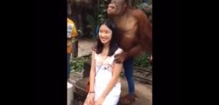 ¡Amor a primera vista! Este mono se puso 'cariñoso' con turista