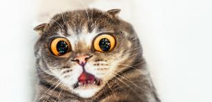 Esta es la broma más cruel que podrías hacerle a tu gato