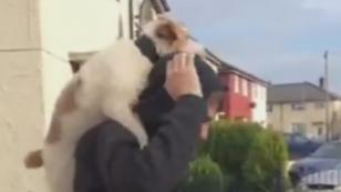 ¿Harías lo mismo con tu perro? Joven monta bicicleta y lleva en su espalda a mascota [VIDEO]