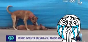 Perrito que intenta reanimar a su compañero atropellado en Chincha te hará moquear [VIDEO]