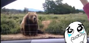 Este oso tiene más modales que muchas personas