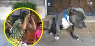 ¡Vacílate con el video del 'perro arrepentido'!