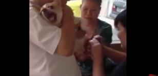 ¡Este perrito se convierte en un gato y también 'grita' como un bebé cuando le cortan las uñas!