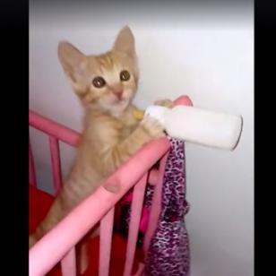 Este gatito enternece al pedir su leche [VIDEO]