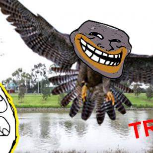 Mira qué hizo este halcón para convertirse en el más 'troll' de YouTube [VIDEO]