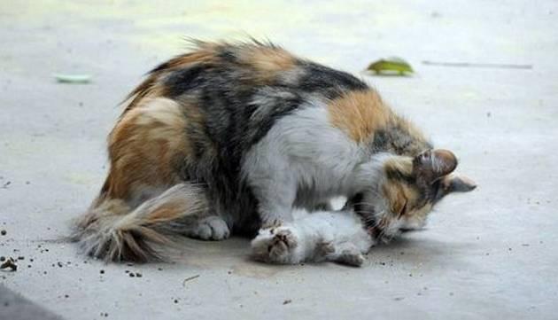 Esta gata intentó revivir a sus gatitos asesinados... Sus esfuerzos te romperán el corazón