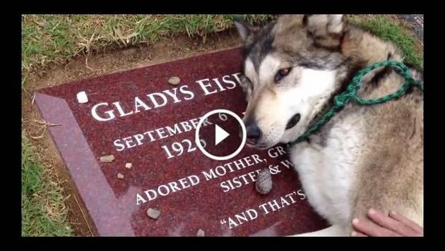 Este perro que llora sobre la tumba de su dueña te romperá el corazón