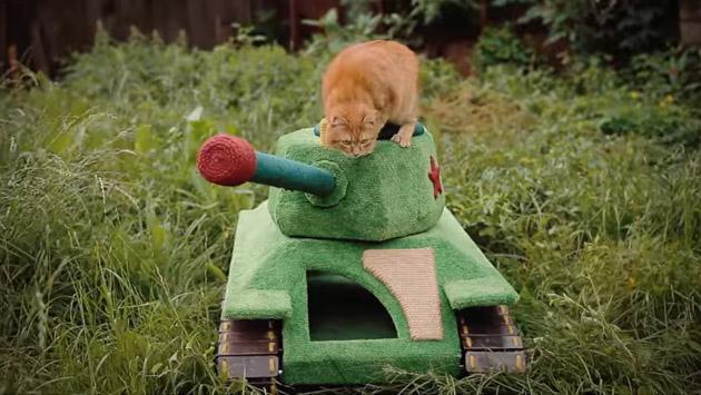 Construyó un tanque para gatos y se volvió viral de YouTube [VIDEO]